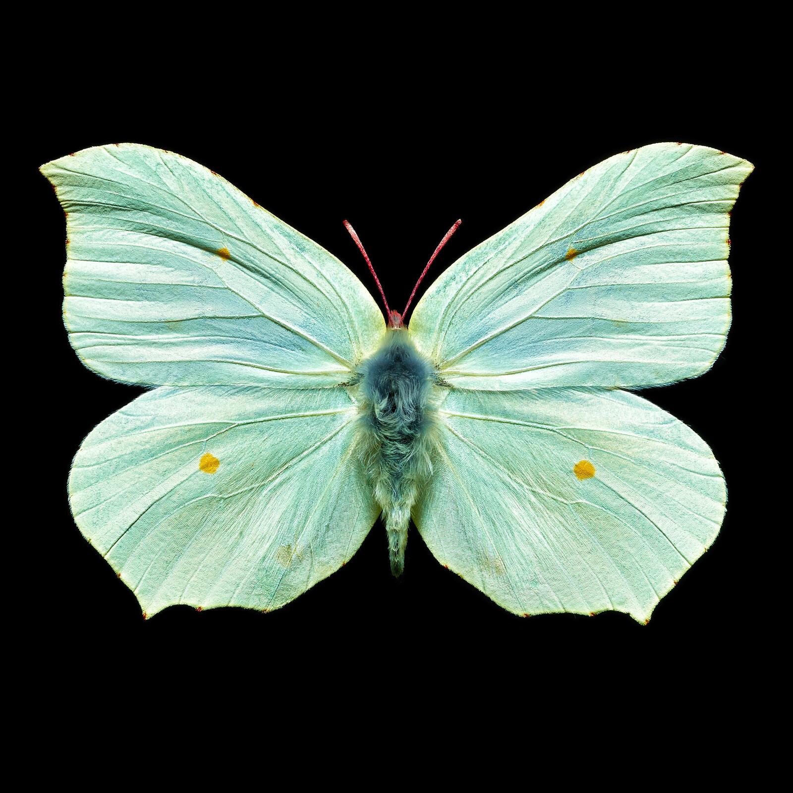 Butterfly V - Heiko Hellwig