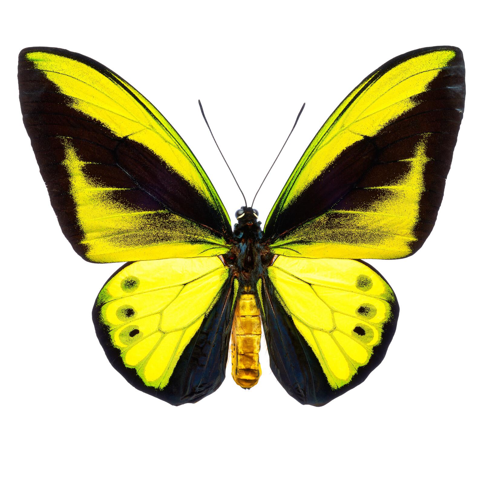 Butterfly VIII - Heiko Hellwig
