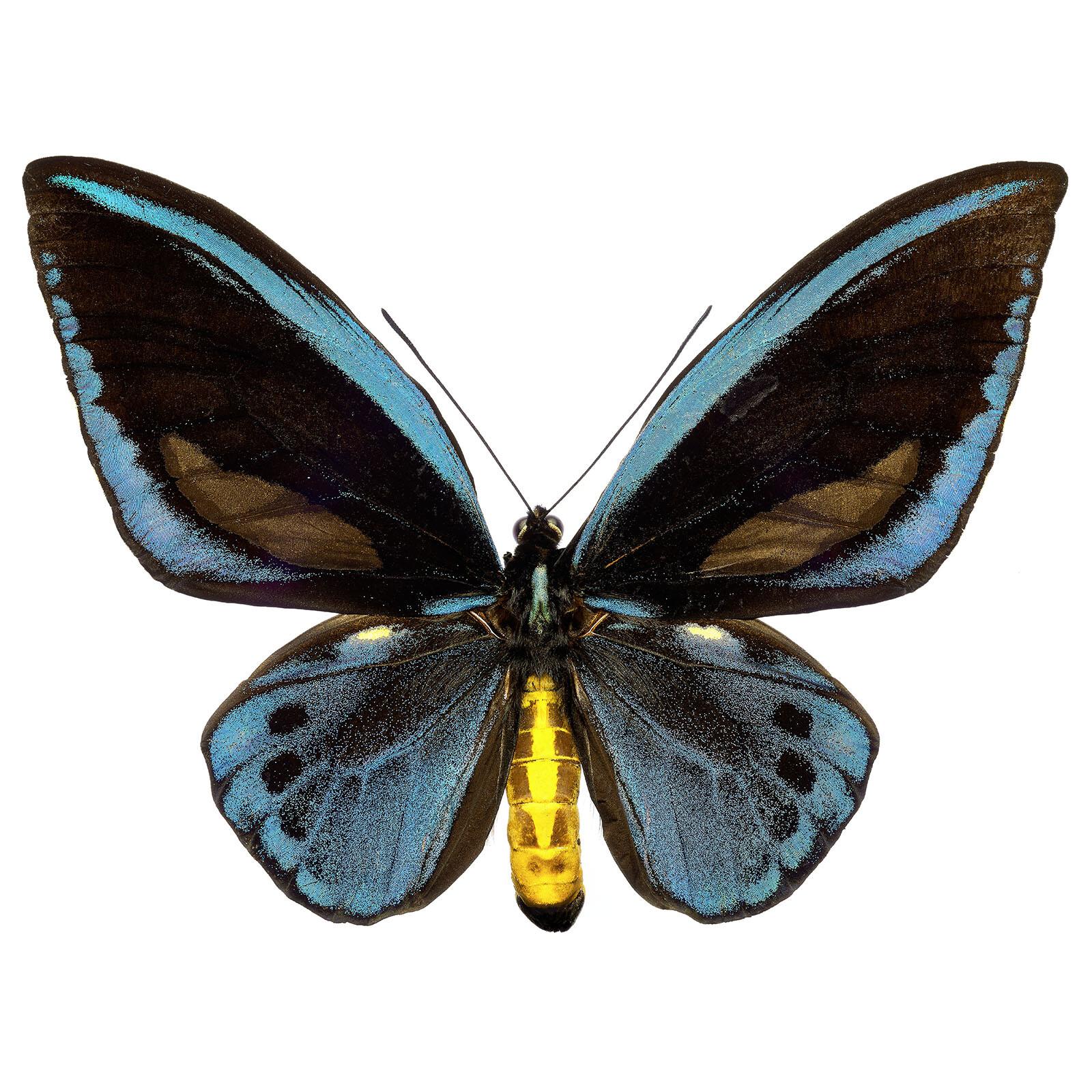 Butterfly IX - Heiko Hellwig
