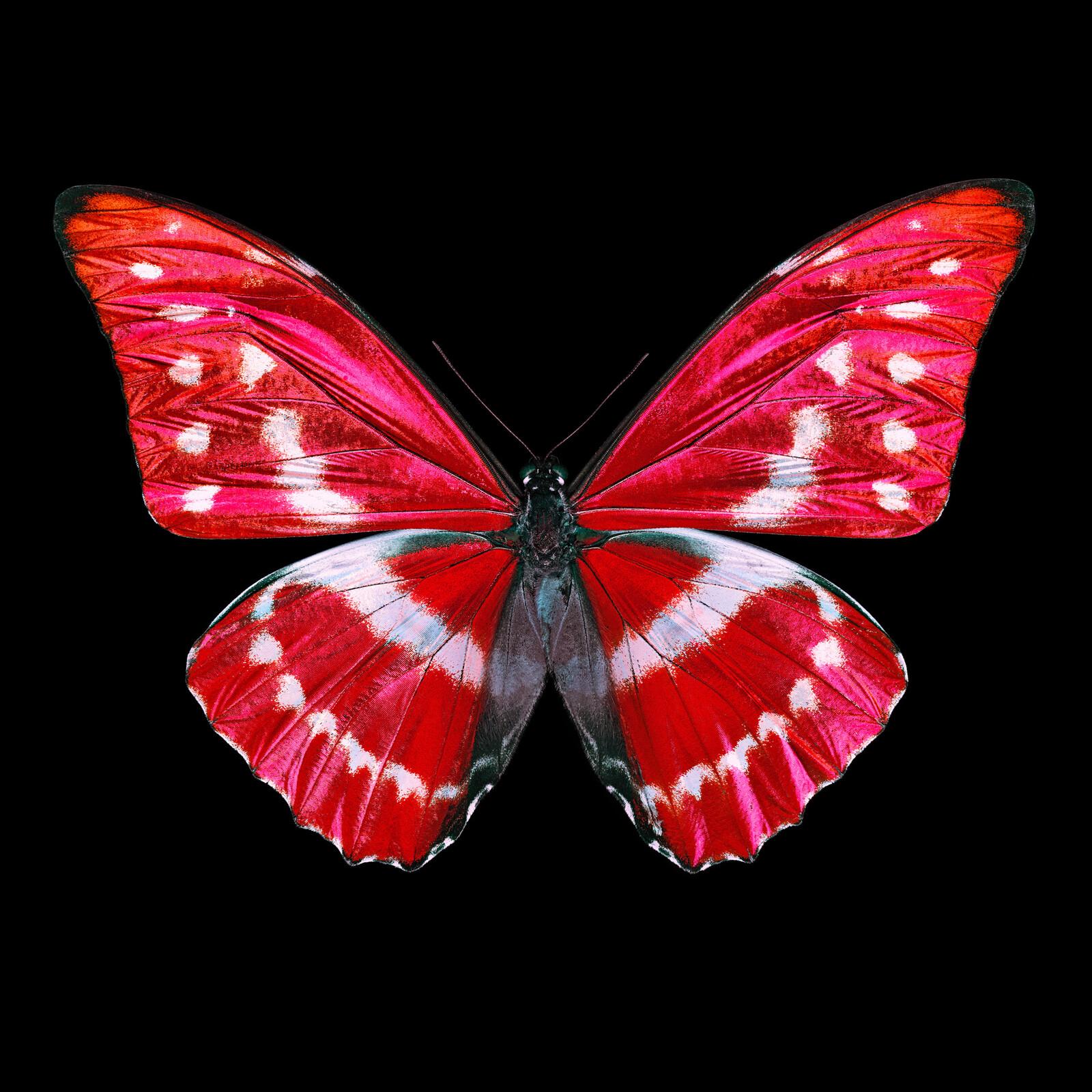 Butterfly X - Heiko Hellwig