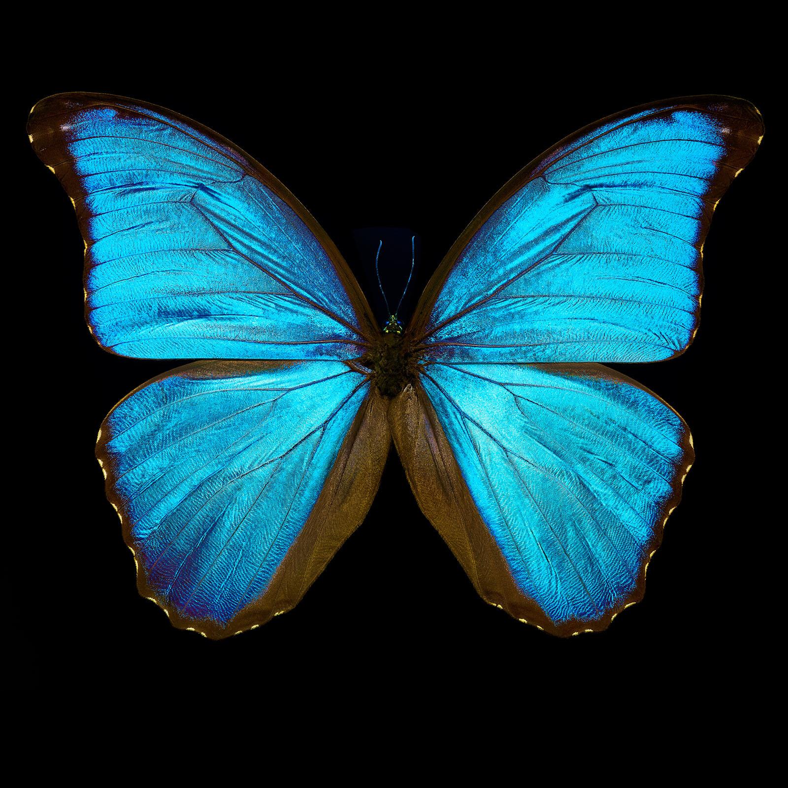 Butterfly III - Heiko Hellwig