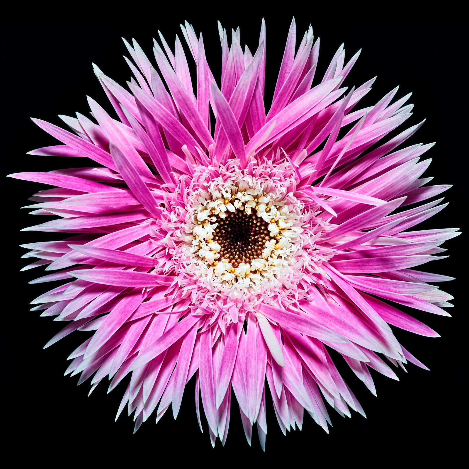 Blossom II - Heiko Hellwig