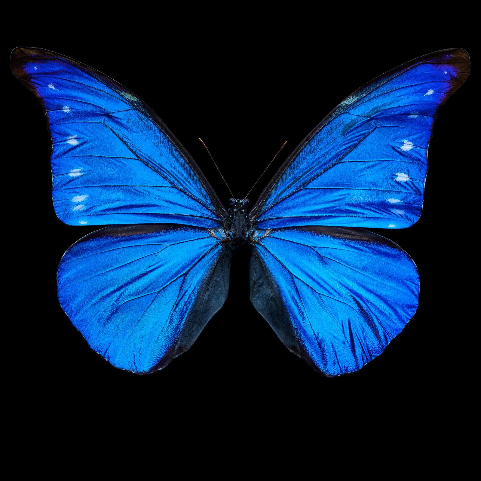 Butterfly XII - Heiko Hellwig