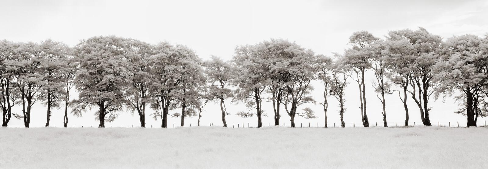 Auchindoun, Scotland - Helmut Hirler