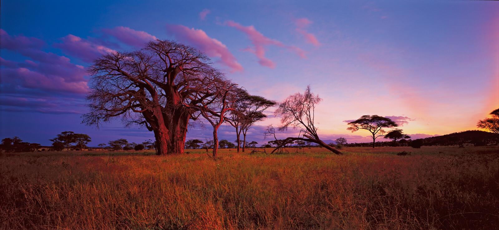 Baobab Tarangire National park, Tanzania - Horst Klemm