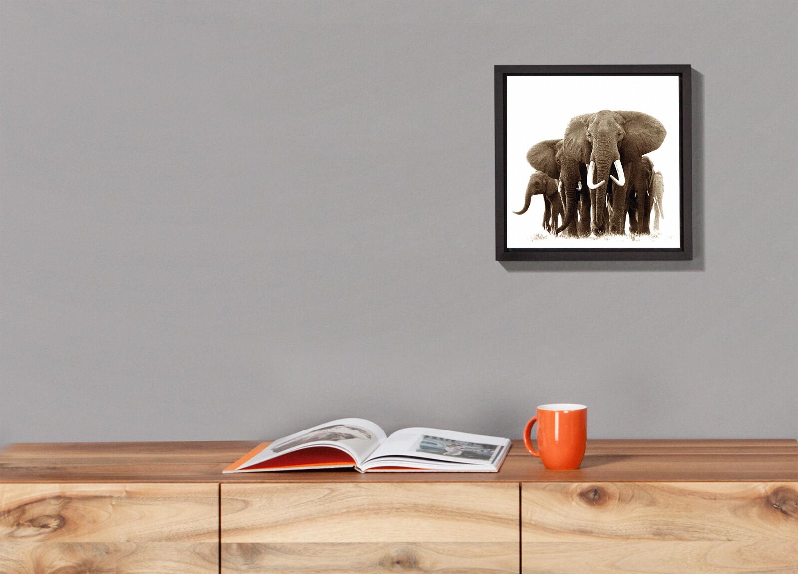 African Elephant Bull, Botswana - Horst Klemm