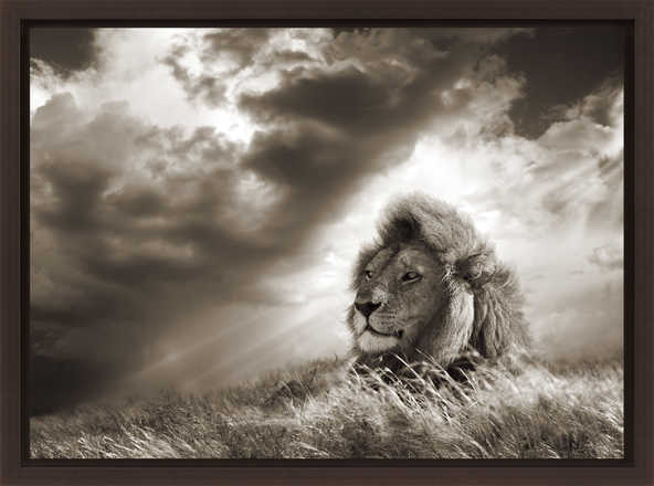 Lion in grass, Serengeti, Tanzania  - Horst Klemm