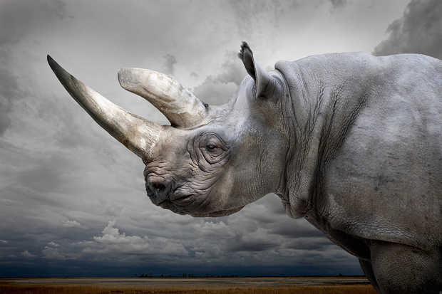 Black Rhino with Sky - Horst Klemm