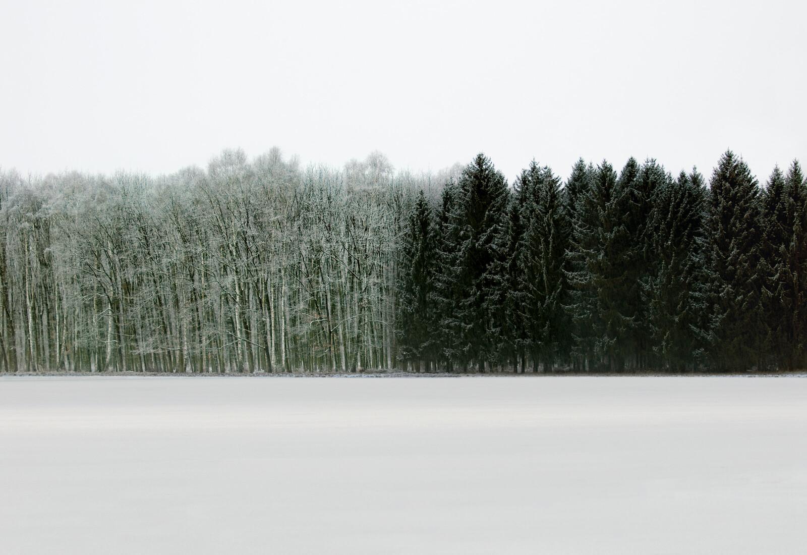 Forest 2 - Hartwig Klappert