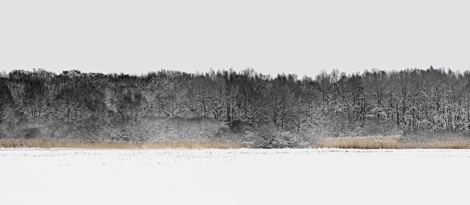 Forest 5 - Hartwig Klappert