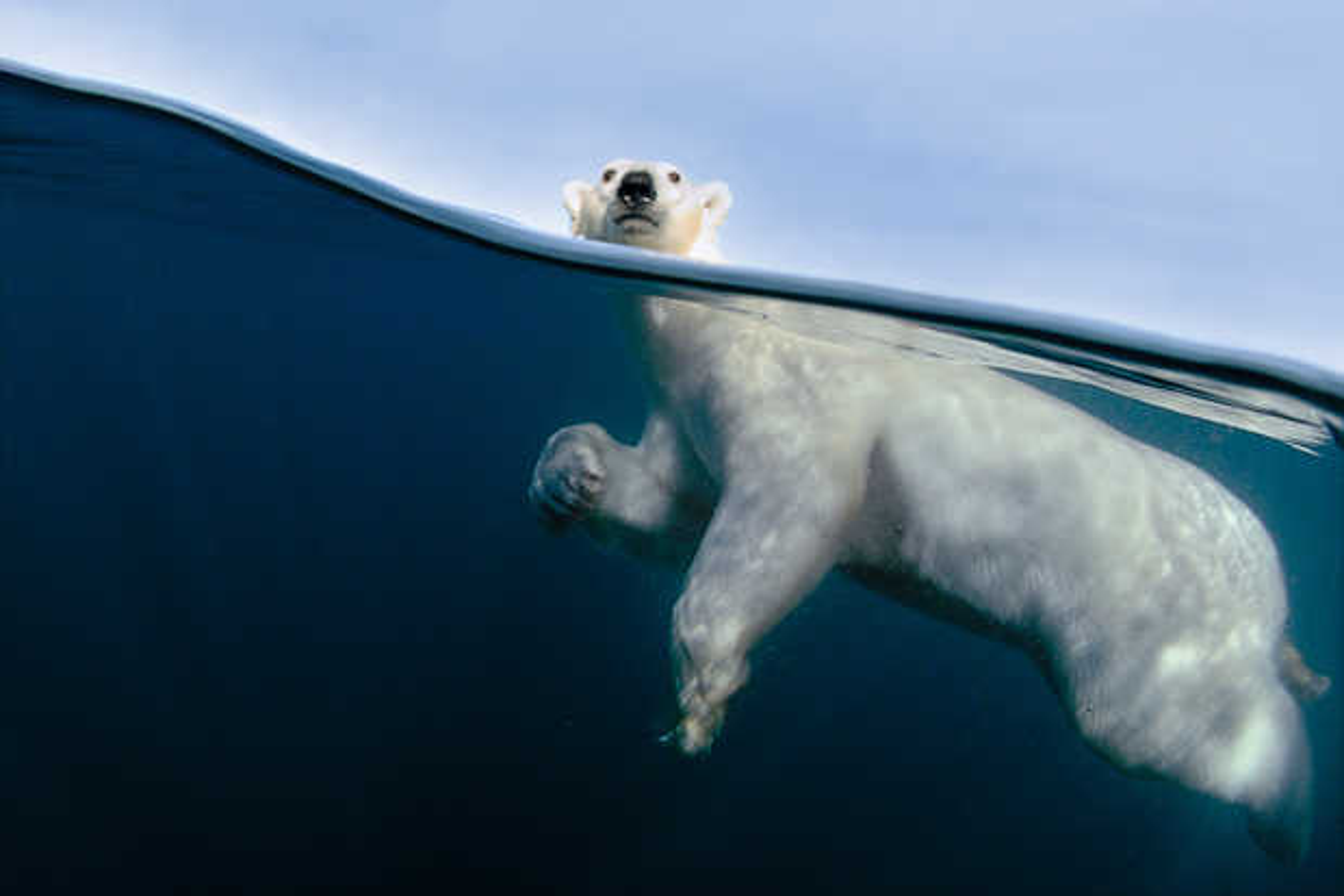 Polar Bear Exercise - Joe Bunni