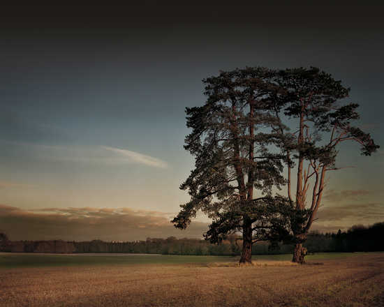 St Giles House Park Trees at Sunset - Justin Barton