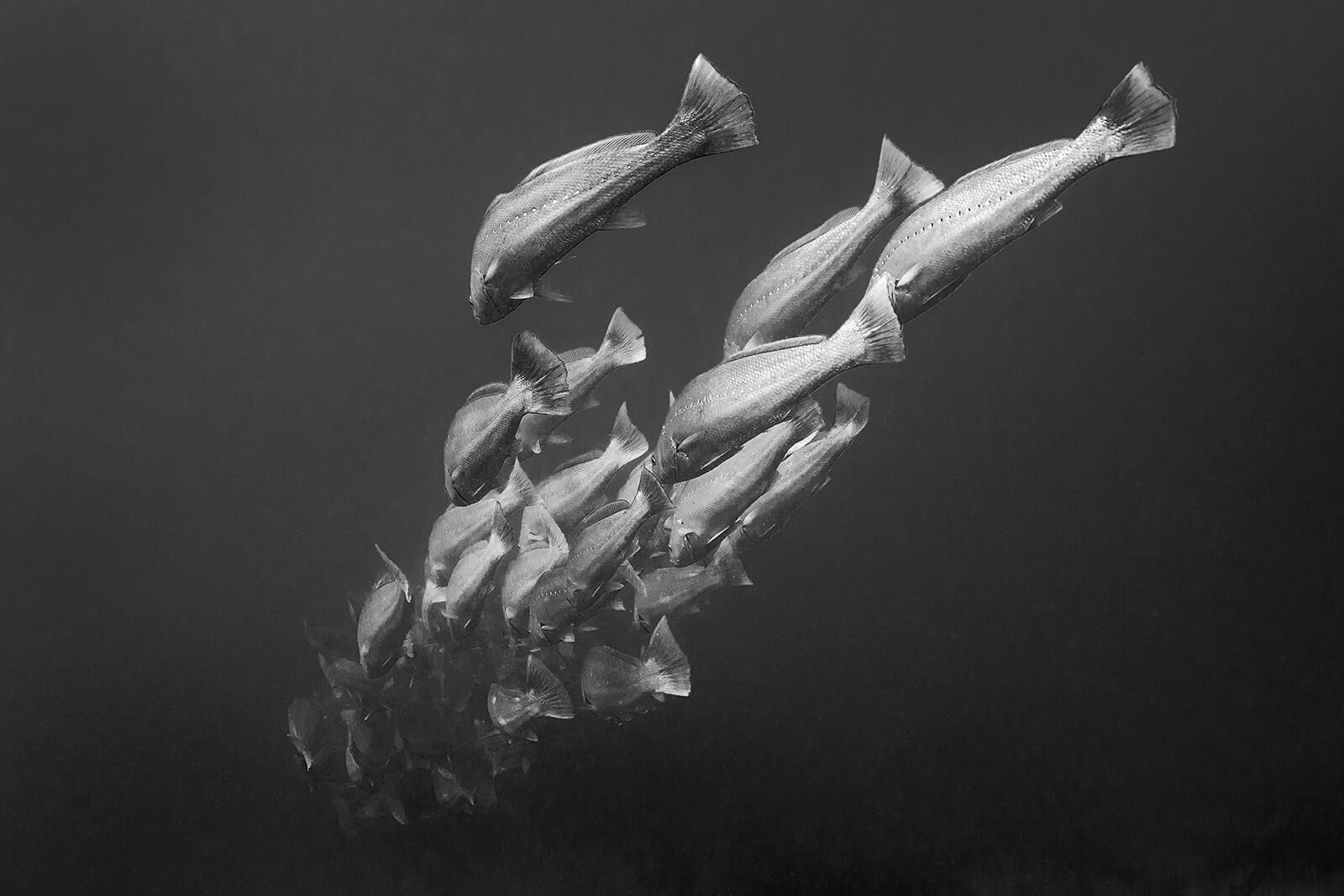 Into The Deep - Jean - Marie Ghislain