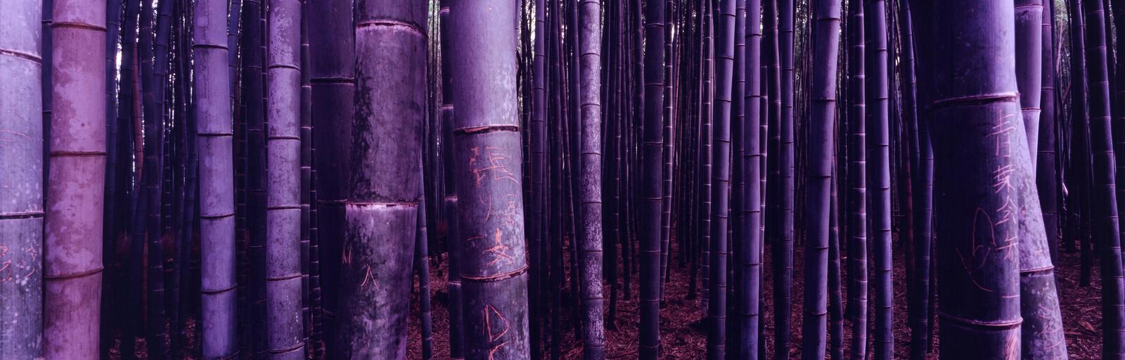 Bambus (Arashiyama) - Farin Urlaub