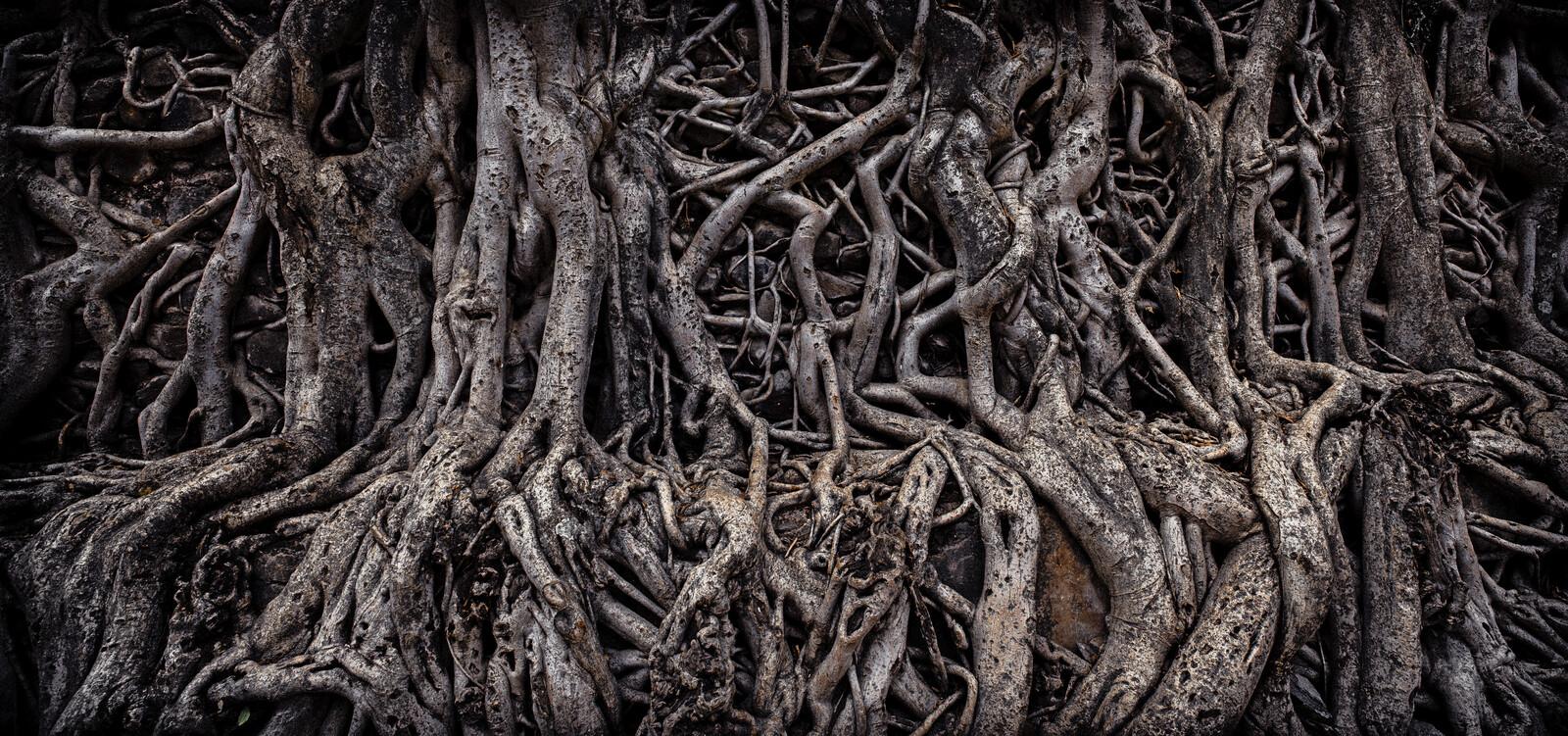 Banyan Tree - Farin Urlaub