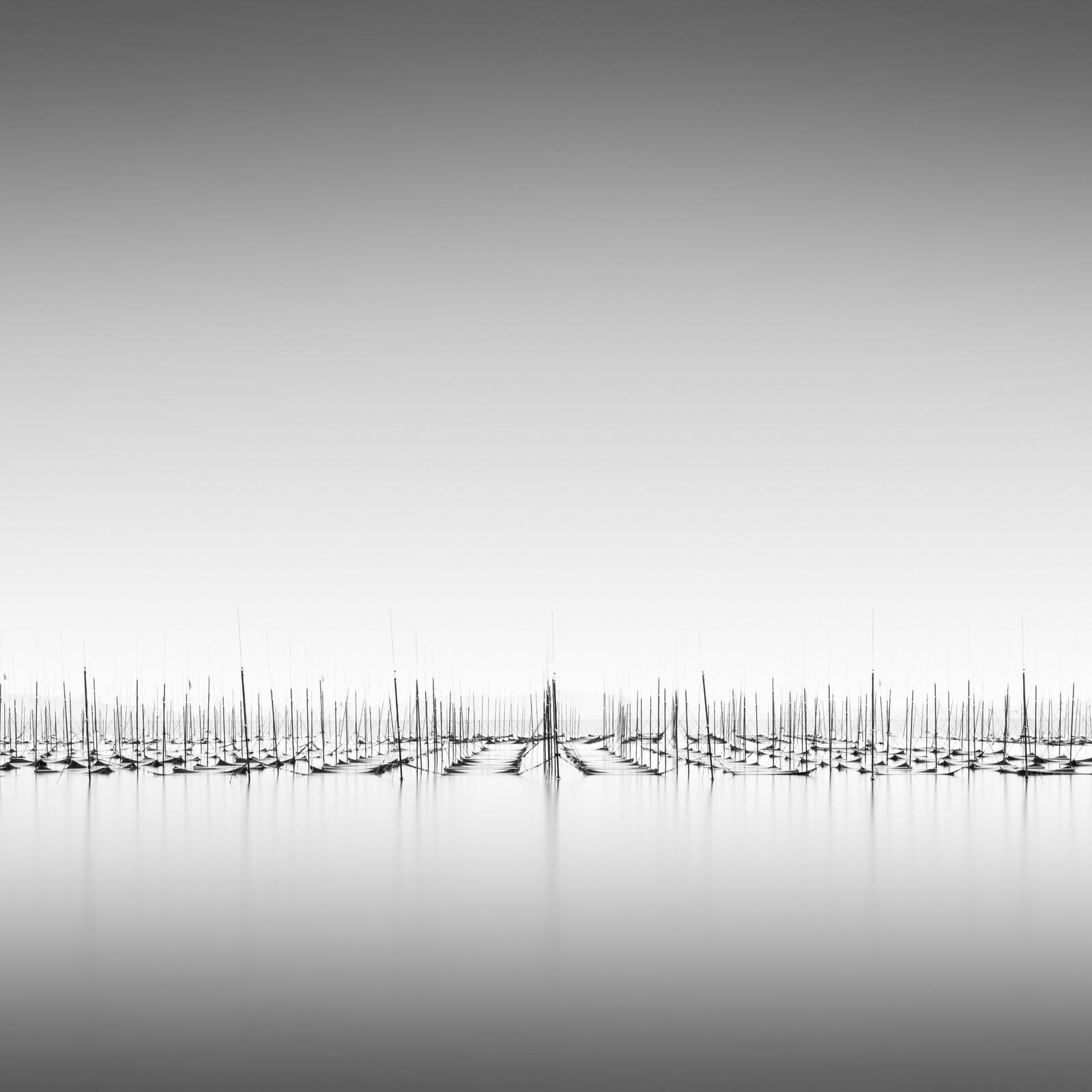 Nori-Field - Michael Levin