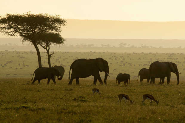 Early Morning in the Masai Mara - Michael Poliza