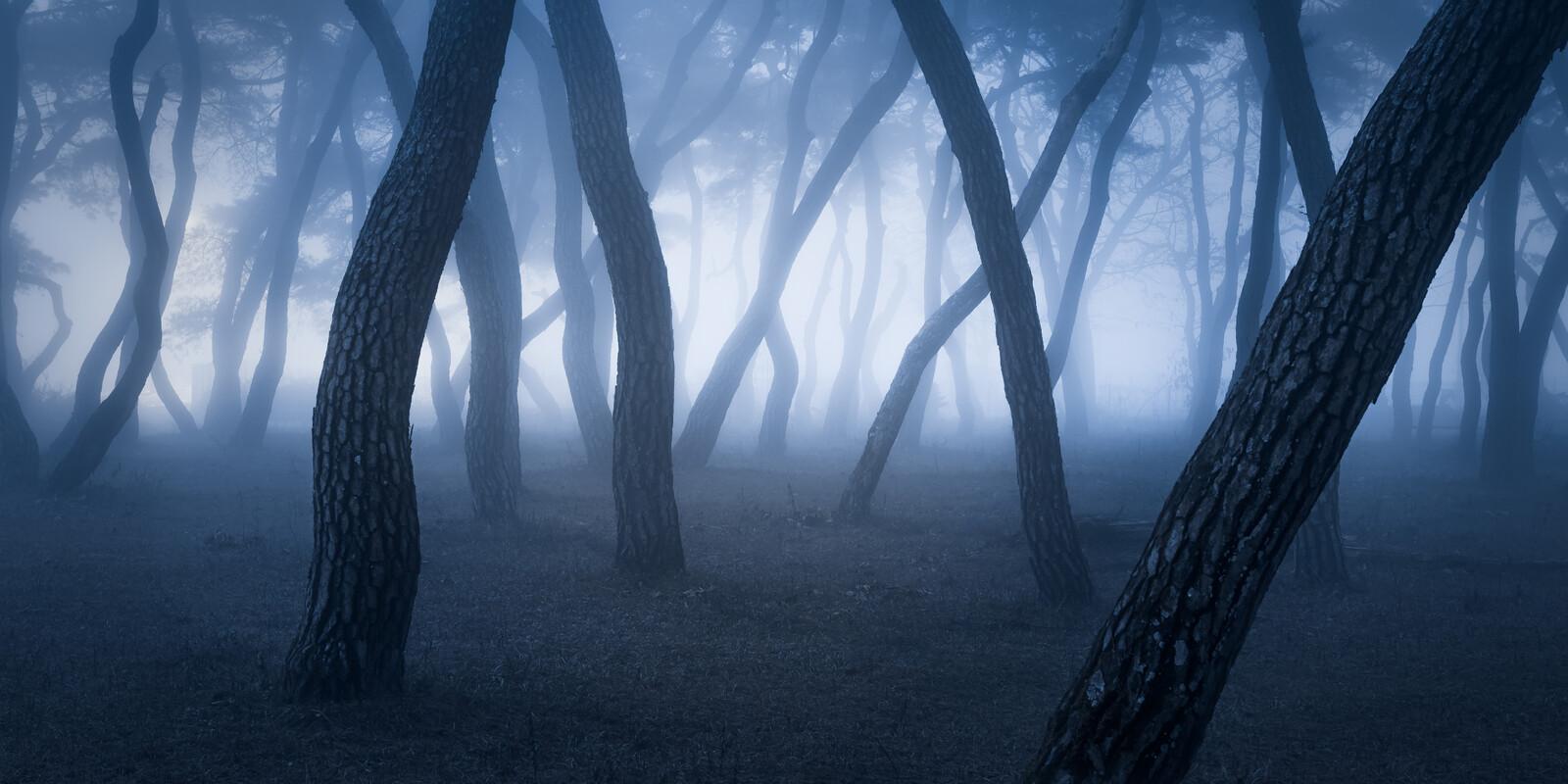 Pine Forest - Nathaniel Merz