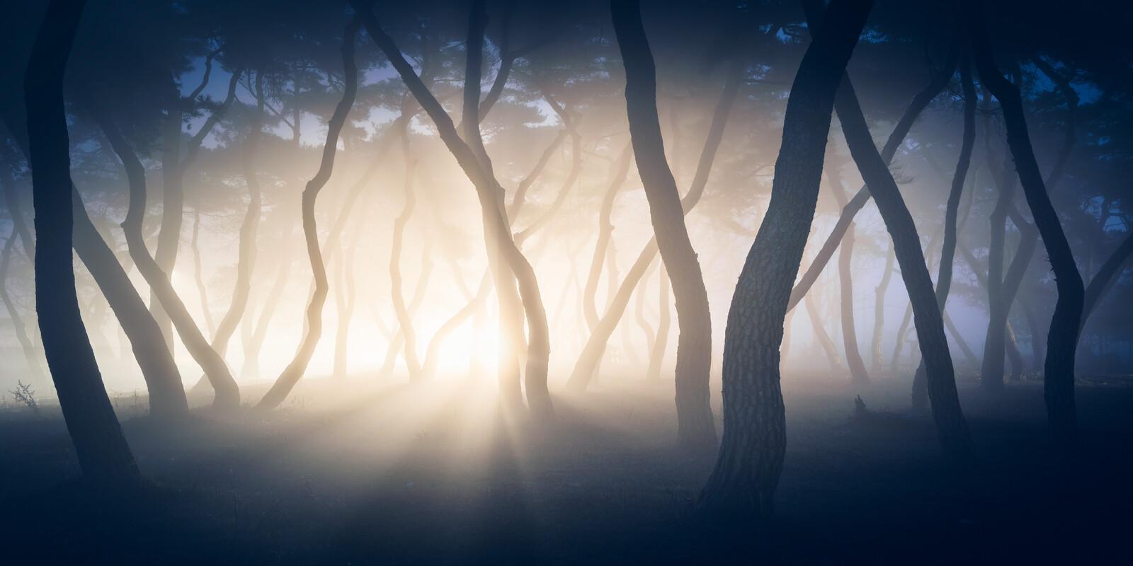 Pine Forest II - Nathaniel Merz
