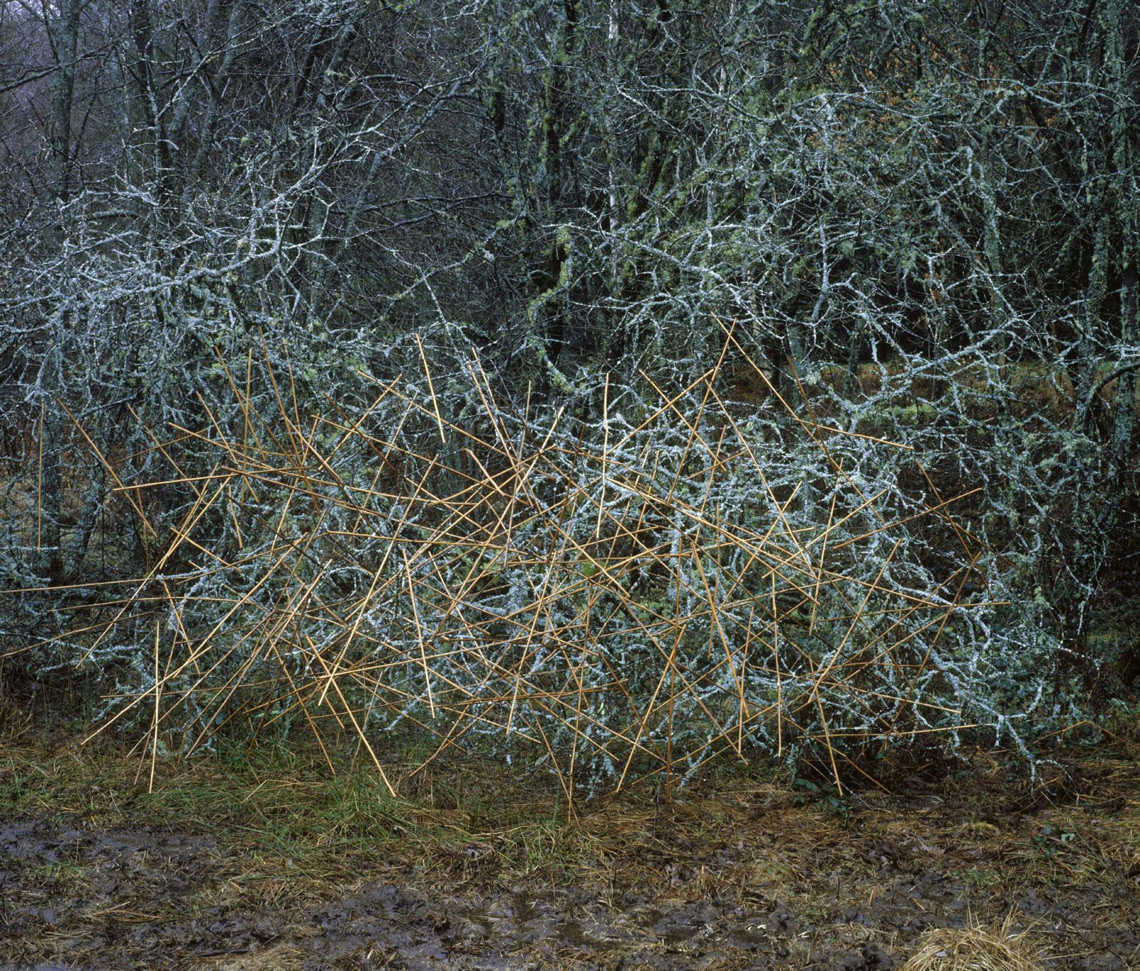Farnstiele auf Zweige gesteckt - Nils-udo
