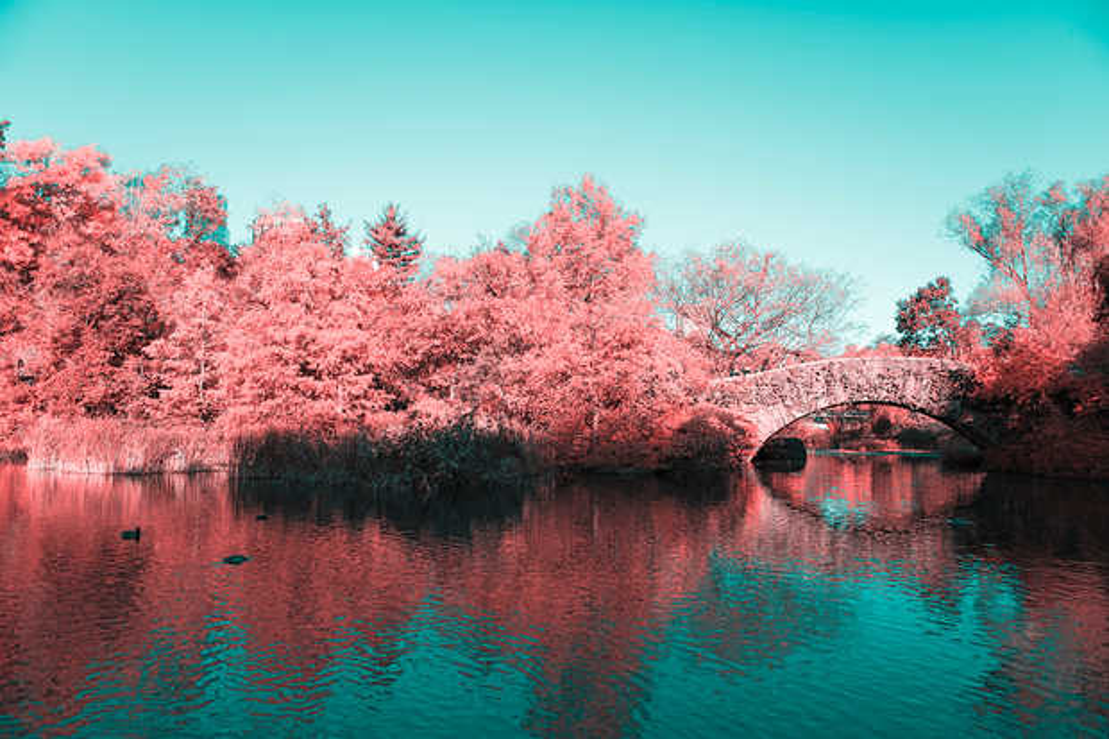 Infrared NYC V - Paolo Pettigiani