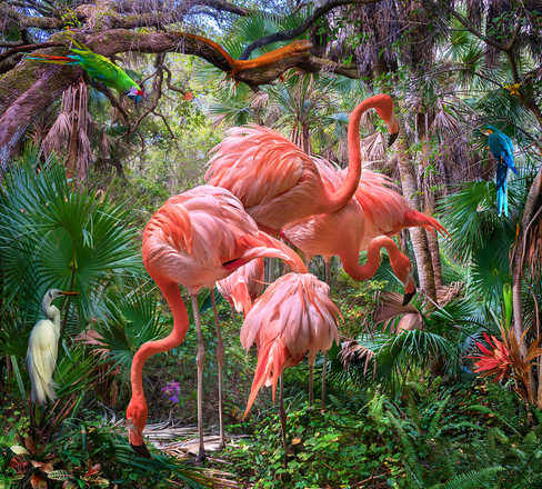 Lost Flamingos and Some Acquaintances - Pat Swain