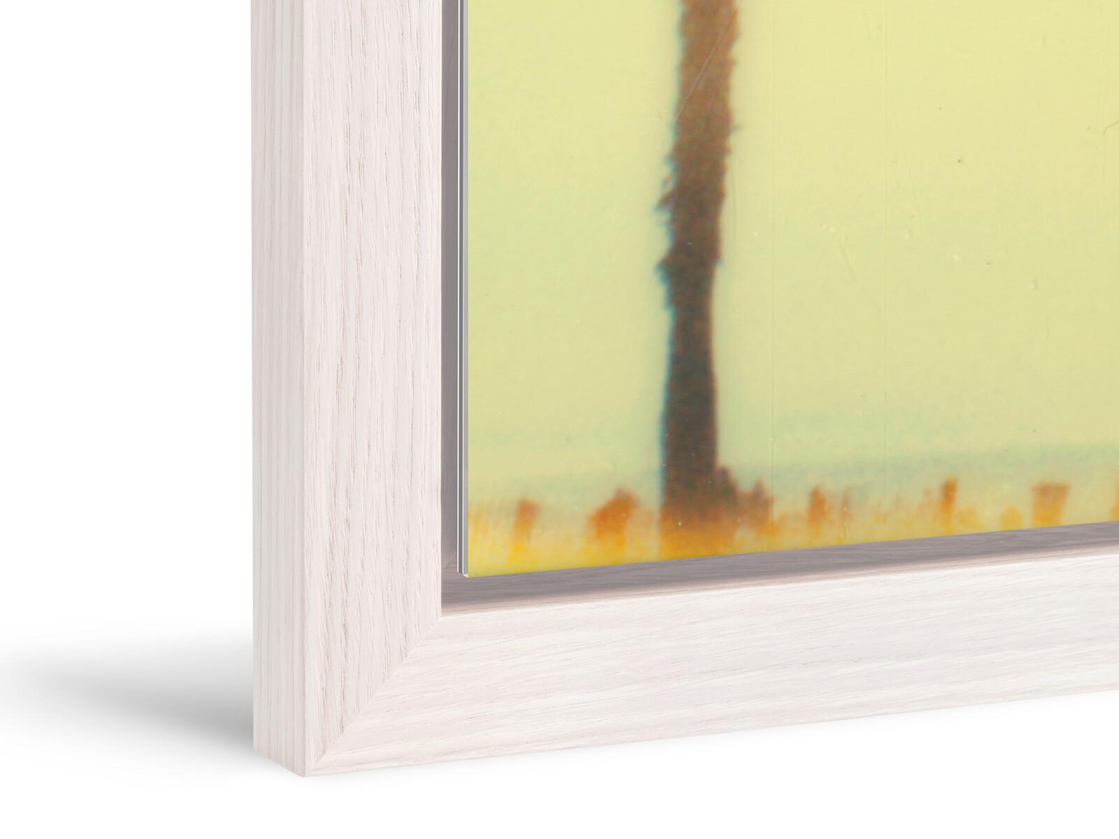 Santa Monica Palm Trees II - Stefanie Schneider