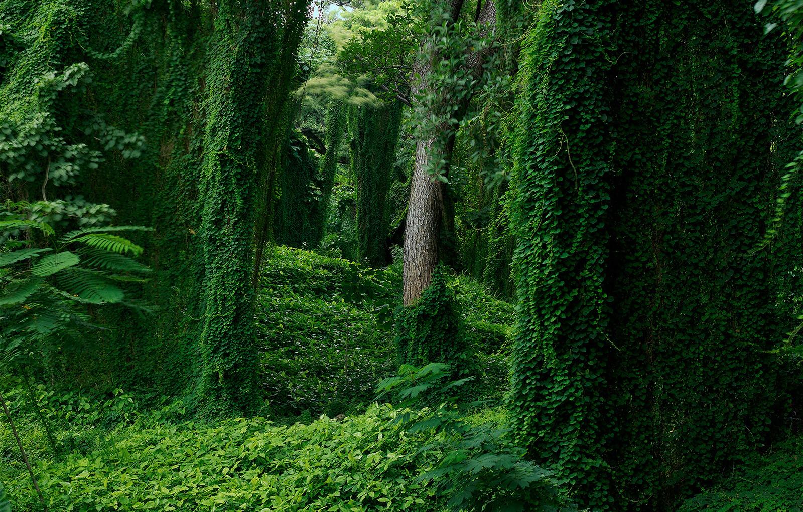Forest in Cuba I - Werner Pawlok