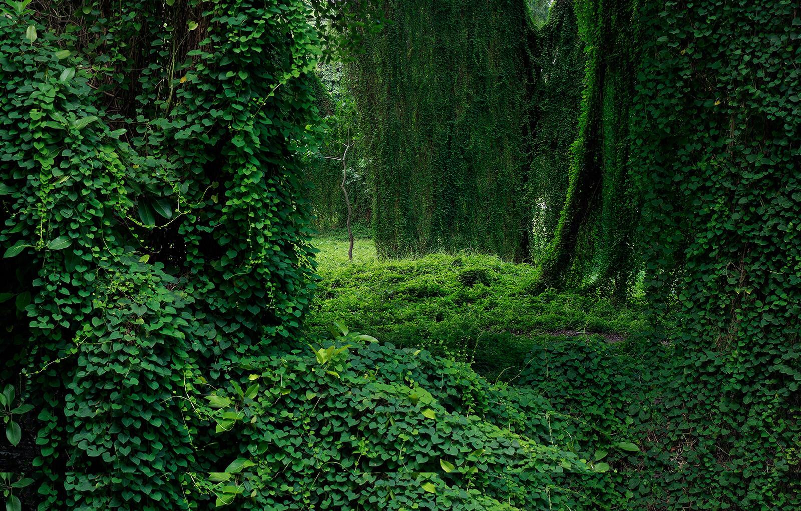 Forest in Cuba II - Werner Pawlok