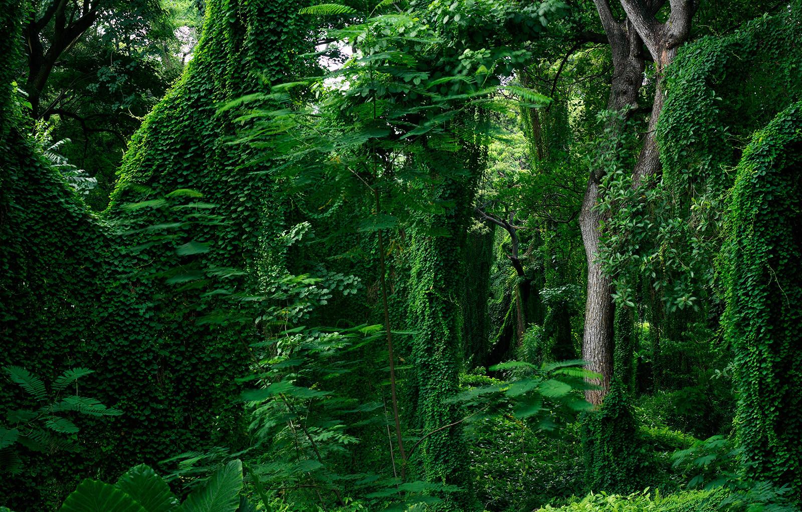 Forest in Cuba III - Werner Pawlok