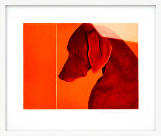 William of Orange - William Wegman